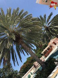 Palm рухнул
