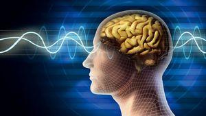 Создан чип, «имитирующий человеческий мозг». видео