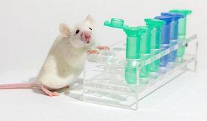 Учёные вылечили мышей от вич