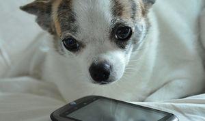 В microsoft считают google android щенком
